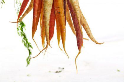 wortel recepten foto